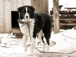 Cold Weather Law, Winter Dog Safety