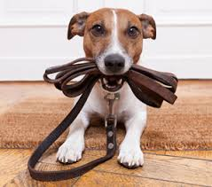 Here's How to Acclimate Your Puppy to His New Home