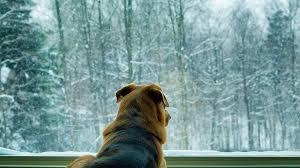 Banishing Your Dog's Winter Blues