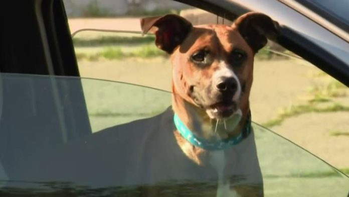 Dog stolen from Detroit 4 years ago reunited with owner
